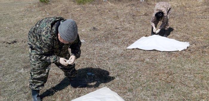 Уже 87 человек стали жертвами клещей на Алтае