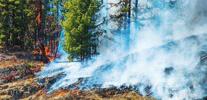 МЧС предупреждает о высокой пожароопасности в Усть-Коксинском районе