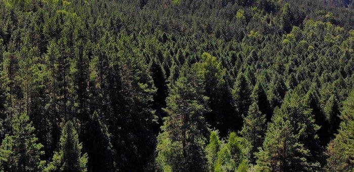 На лесовосстановление потратят почти 60 млн рублей