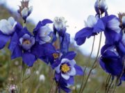 Издан атлас-определитель цветов Катунского заповедника