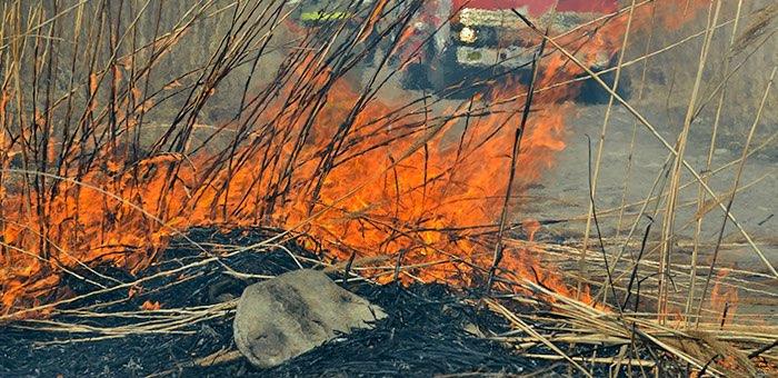 Пожароопасный сезон начался в Республике Алтай