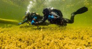Первая в России подводная экотропа открылась на Алтае