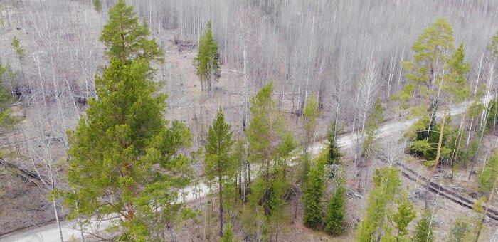 В Республике Алтай все готово к проведению полевых лесоустроительных работ
