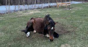 Туристы спасли лошадь из ледяной реки