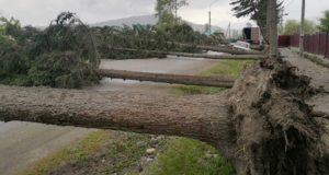 Из-за сильного ветра в Усть-Коксе упали сразу семь деревьев