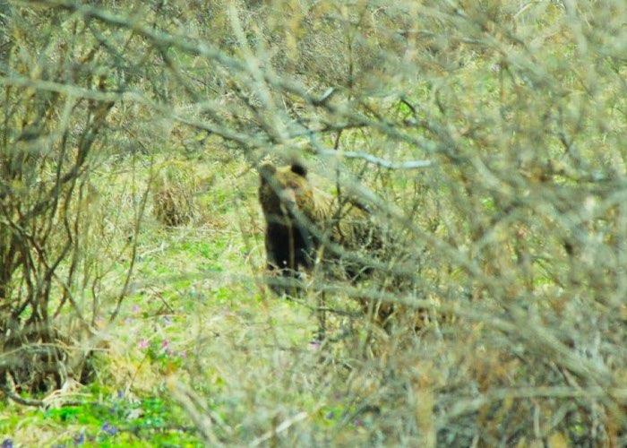 В Алтайском заповеднике проходит учет маралов и медведей