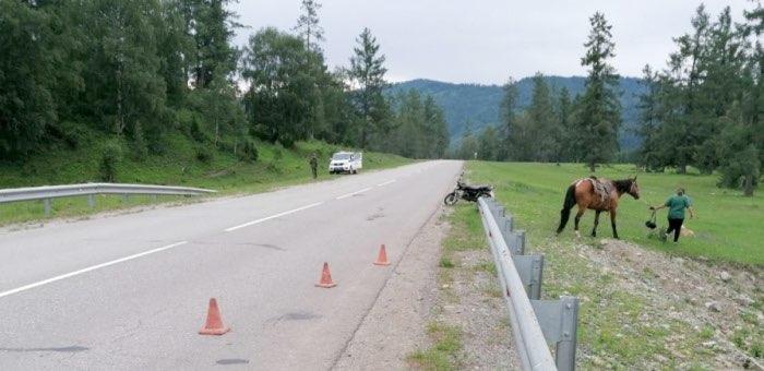 Пьяный мотоциклист врезался в лошадь, шедшую по обочине