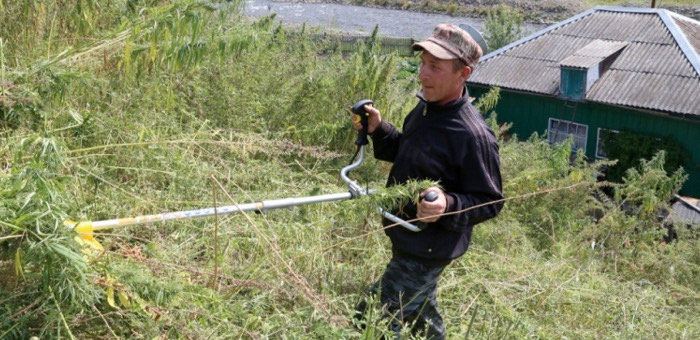 В Республике Алтай началась операция «Мак»