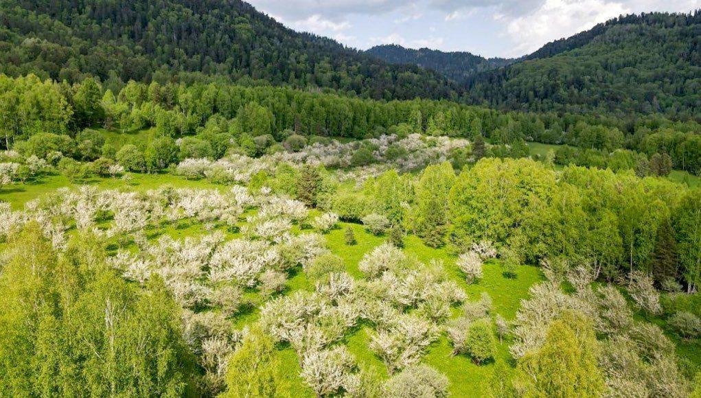 Эксперты оценили состояние садов на Яйлинской террасе