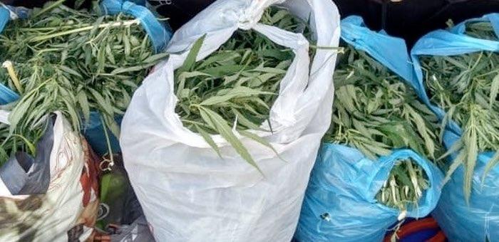 Возле Курая задержали местных жителей с полным багажником марихуаны