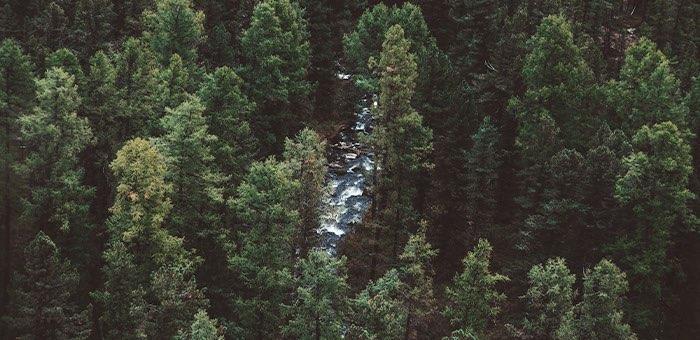 Прокуратуре удалось запретить вырубку леса на территориях произрастания кедра