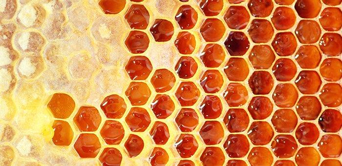 20 тонн меда отправили в Чехию пчеловоды Республики Алтай