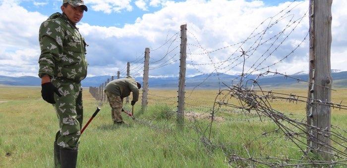 Еще 14 километров колючей проволоки демонтируют на Укоке на границе с Монголией