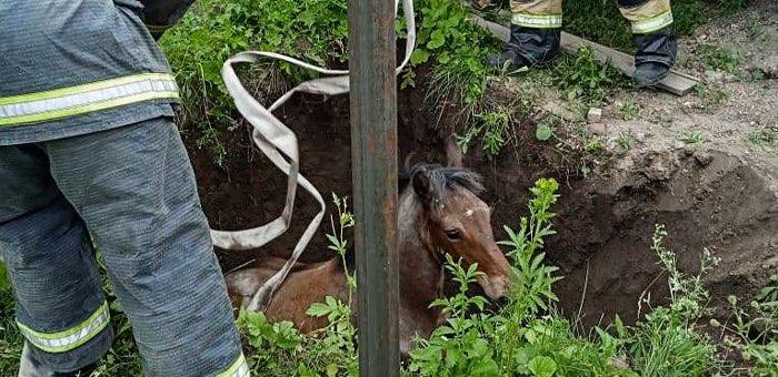 Пожарные сняли с дерева котика и вытащили из ямы жеребенка