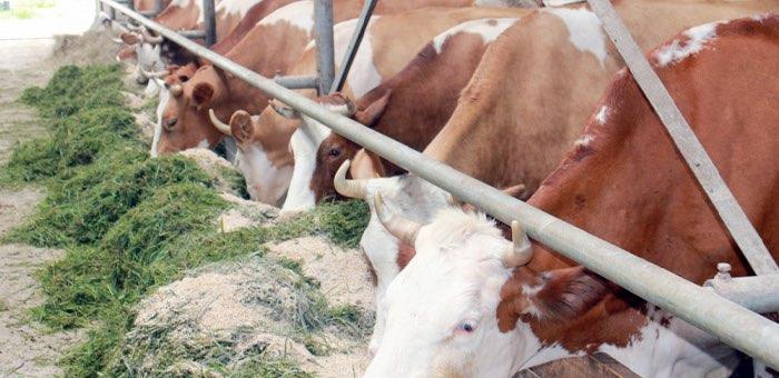 «Агростартап»: на гранты начинающим фермерам выделено почти 32 млн рублей