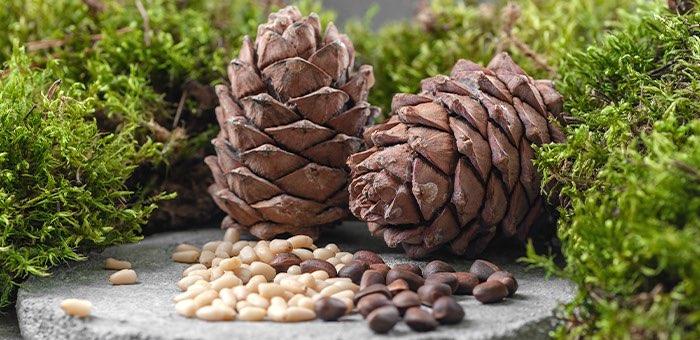 Установлены сроки заготовки ягод и ореха