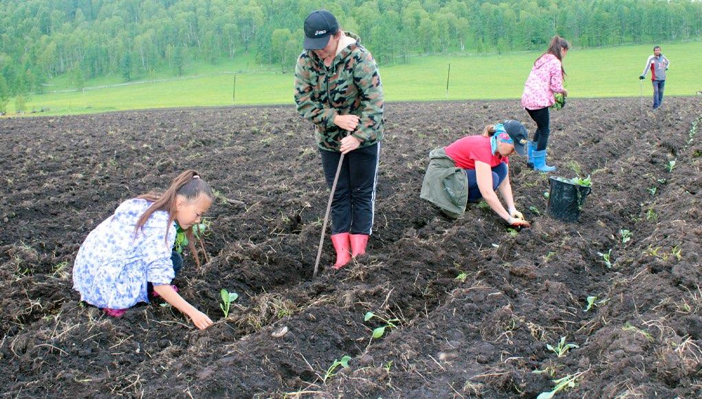 Как грант «Агростартап» помогает фермерам Шебалинского района