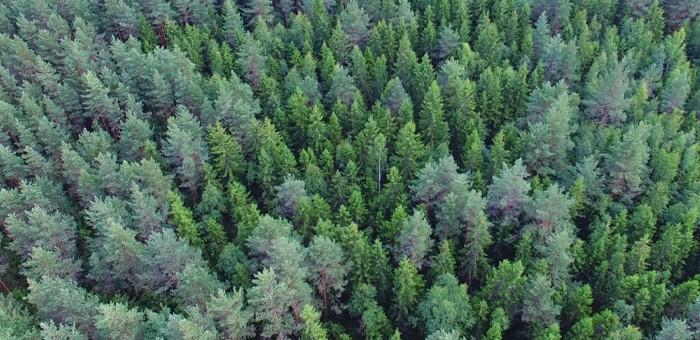 Более 4 тысяч гектаров леса незаконно передали в аренду в Турочакском районе