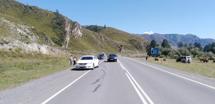 Три автомобиля столкнулись на Чуйском тракте недалеко от Туекты