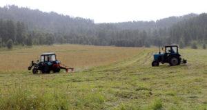 В Шебалинском районе хозяйства приступили к уборке сена