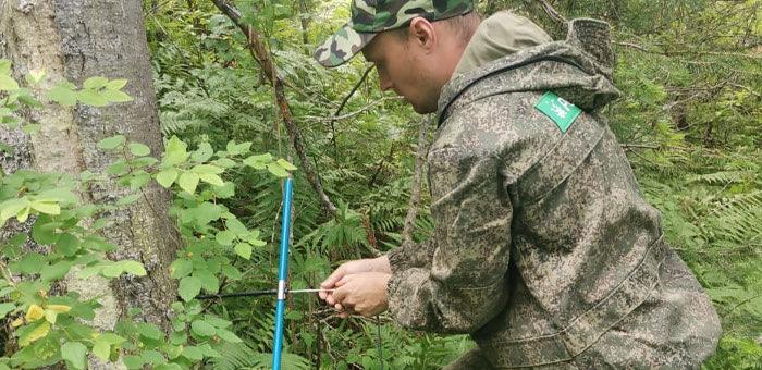 Полевой сезон по лесоустройству завершился в Чойском и Турочакском лесничествах