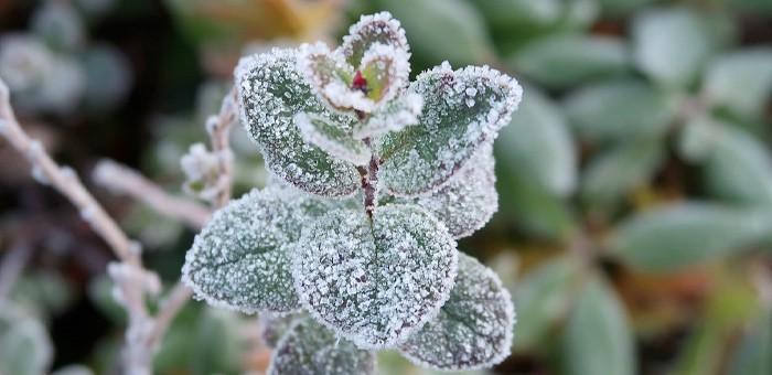 В ближайшие дни в Республике Алтай ночами возможны заморозки