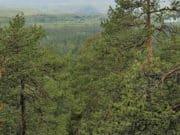 В лесах Чойского района пропал человек