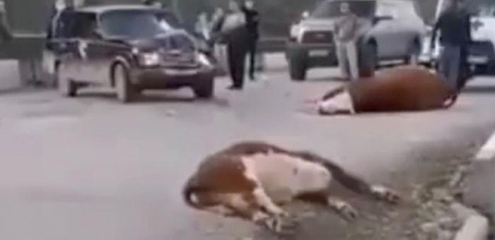 Жительница Усть-Кана врезалась на ВАЗе в стадо коров на мосту через Чарыш