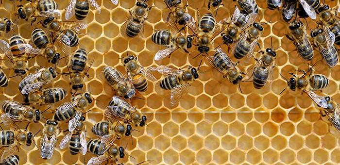 Ярмарка «Золотая пчелка Горного Алтая» пройдет в Горно-Алтайске
