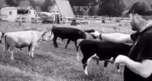 Полицейские нашли мужчину, стрелявшего в коров на Алтае