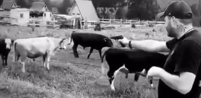 Полицейские нашли мужчину, стрелявшего в коров на Алтае. Его ждет крупный штраф