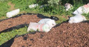Решил подкалымить: житель Горно-Алтайска вез в грузовике три тонны краснокнижного золотого корня