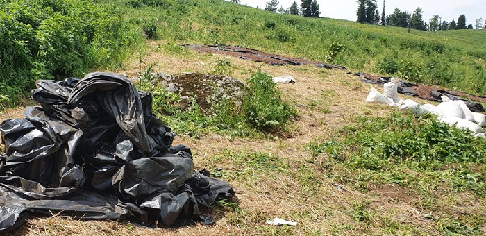 Почти 3 тонны «золотого корня» изъяли у жителя Усть-Коксы