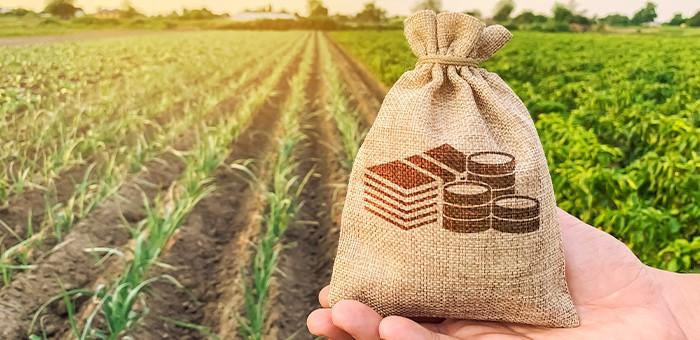 На гранты «Агростартап» в этом году направлено почти 36 млн рублей