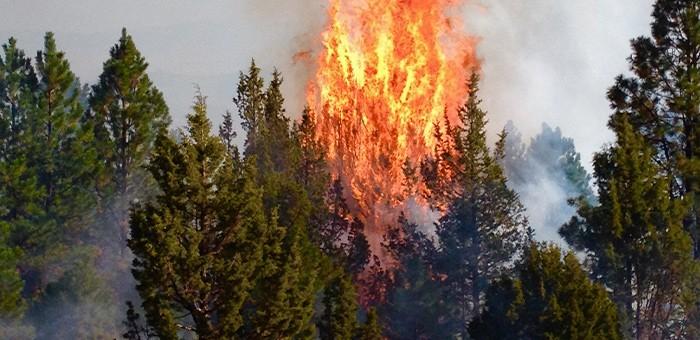 Более полумиллиона заплатил мужчина за устроенный им лесной пожар