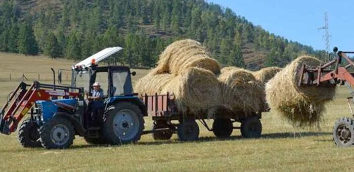 В Онгудайском районе завершается заготовка кормов