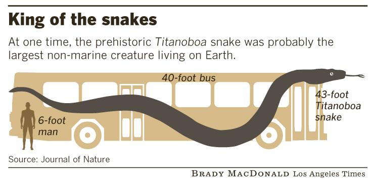 Лос Анджелес Таймс сравнила размеры автобуса и ископаемой змеи