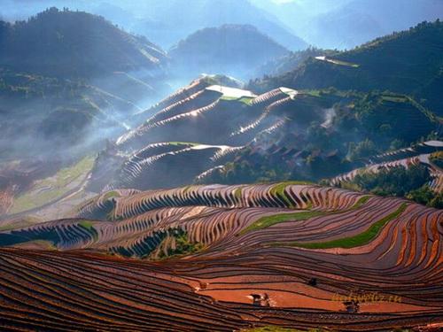 Яо и мяо на таких полях выращивают рис