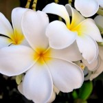 В рамках «Музейной ночи» в Горно-Алтайске пройдет «Вальс цветов»