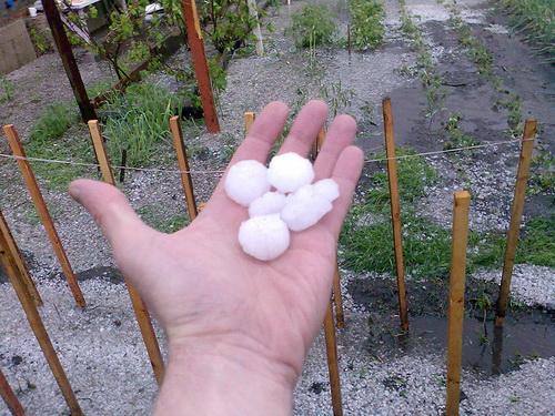 Размер градин достигал размера перепелиных яиц (фото: «Атмосфера»)