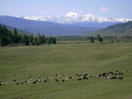 Алтайские земли еще десять лет будут находиться в госсобственности