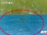 В озере Канас туристы опять увидели «дракона» (видео)