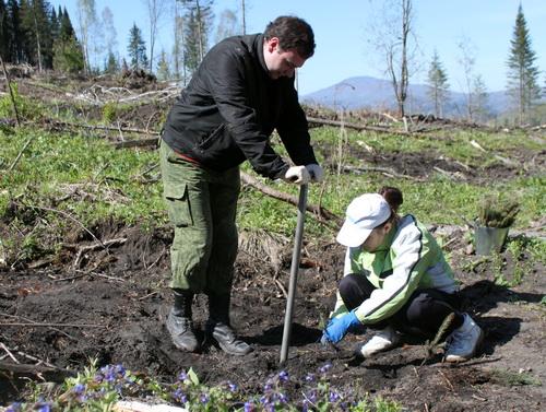 Сотрудники минэкономики посадили 3 тыс. елей
