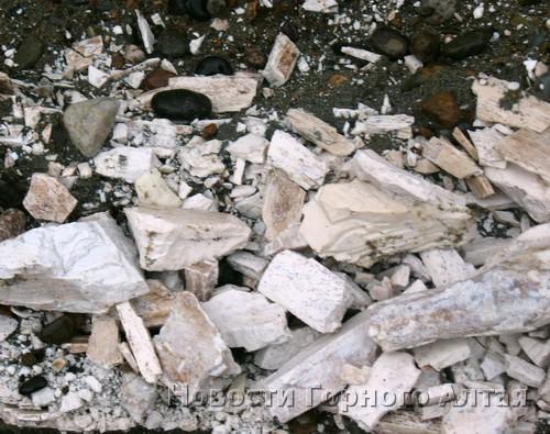 На окраине Маймы нашли бивень мамонта (фото)