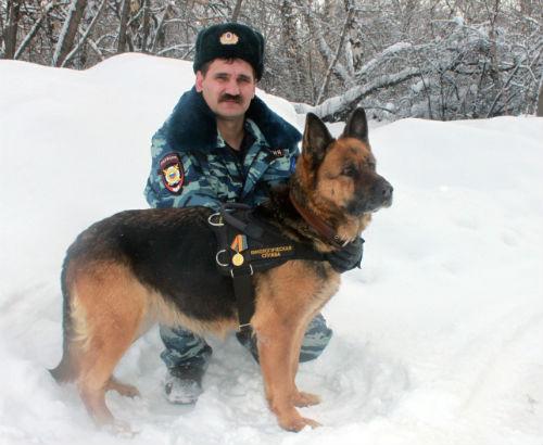 На Алтае служебную собаку наградили медалью