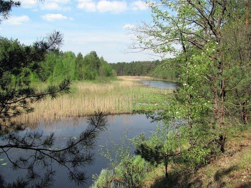 Окрестности села Плютовище. Фото Panoramio.com