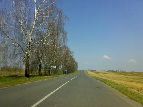 Окрестности деревни Княжицы. Фото Panoramio.com