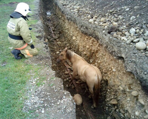 Пожарные спасли в Турочаке лошадь