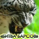 В Горно-Алтайске пройдут бои без правил «Битва барсов»