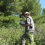 Медведей в Алтайском заповеднике ждет сытая осень